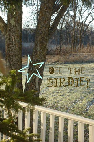 see the birdie?