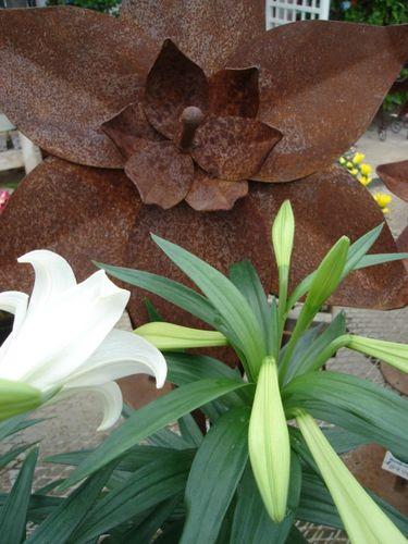fresh & rusty lilies!