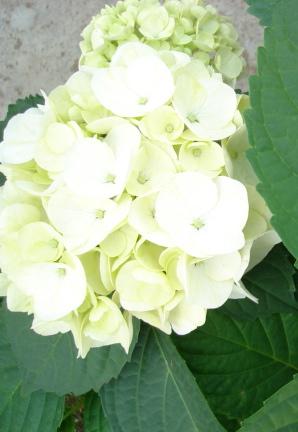 blanc and beautiful