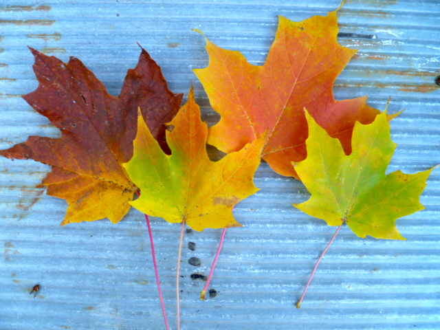 fall color~