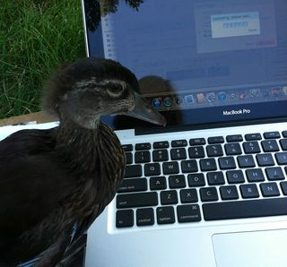duck and blog!