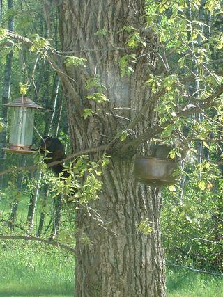 rare birds!