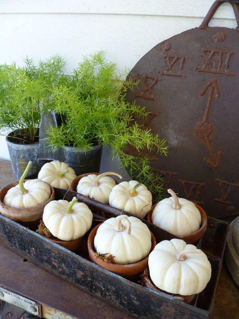 gathered pumpkins